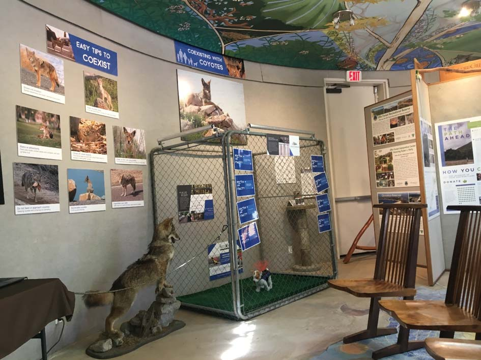 Exhibit teaches homeowners to coexist with coyotes