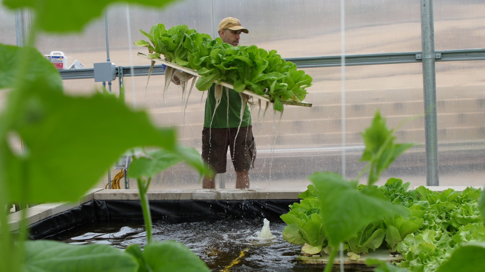Nonprofit sees aquaponics as solution to climate, water and food crisis