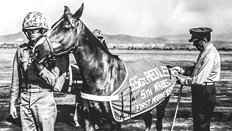 Anniversary salute to legendary Sgt. Reckless