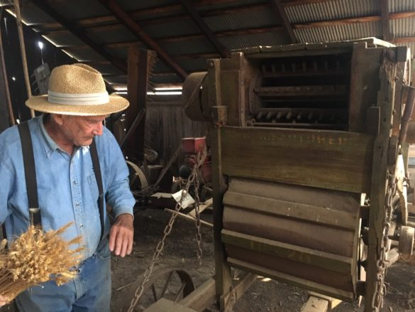 Richard Bumann demonstrates one of the Bumann Ranch's many old farming implements, used to separate the grains of a crop from the straw. Photo by Lexy Brodt