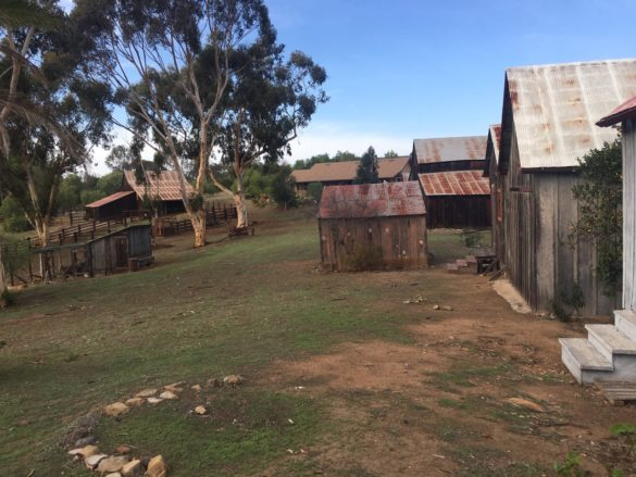 The 10-acre Bumann Ranch is one of the few – if not the only – preserved homestead ranches in San Diego county. The land was settled in 1886 under the Homestead Act, which granted western-moving migrants 160 acres of land if they were to settle and improve it. Photo by Lexy Brodt