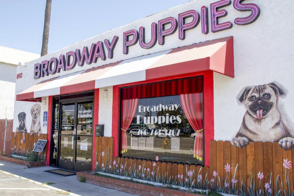 Broadway Puppies